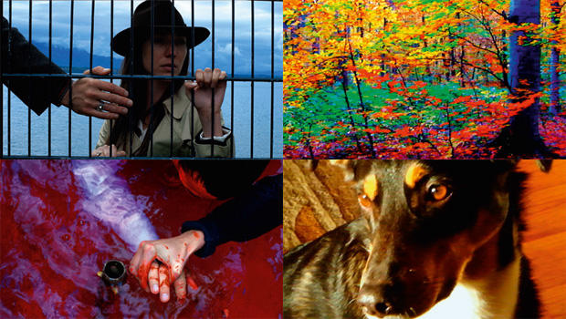 2014年美国国家影评人协会奖(National Society of Film Critics)揭晓  戈达尔《再见语言》获最佳影片