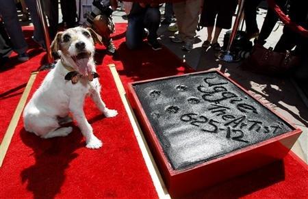 《艺术家》小狗Uggie成中国剧院门前留下掌印的好莱坞第一狗