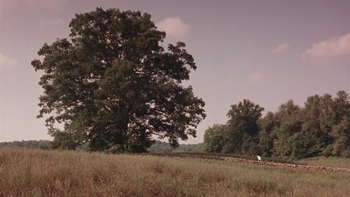 《肖申克的救赎》希望之树受创 全球影迷牵挂