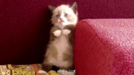 """大下巴今夜秀 超萌恶搞环节【Copycats""""有样学样""""】"""
